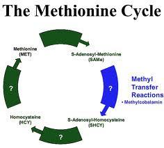 methylatie problemen lyme
